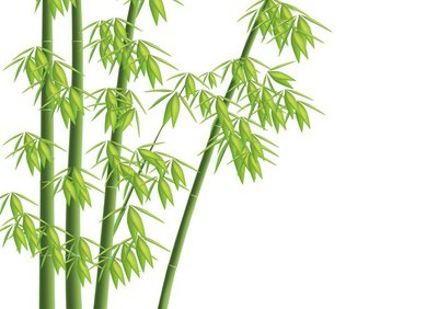 Design element - Vector bamboo tree