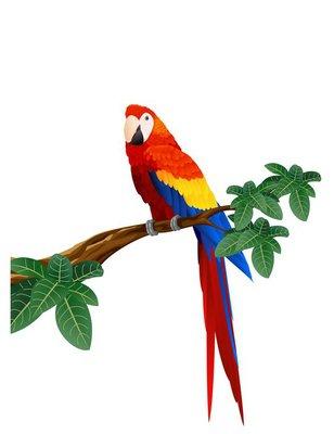 Detaied macaw bird illustration