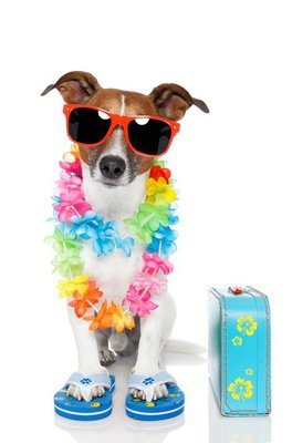 dog as tourist with hawaiian lei