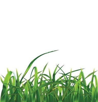 Grass. Vector ilustration