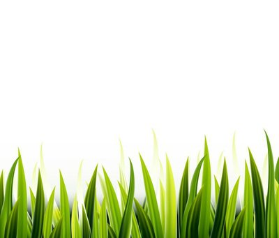 Green grass for you design