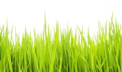 Green grass006