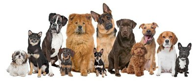 Group of twelve dogs