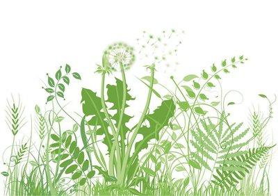 Wall Decal grüne Wiese