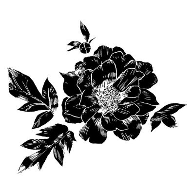 Hand-drawing peonies. Vector graphic flowers. Decorative background for cards, invitations. Template greeting card.