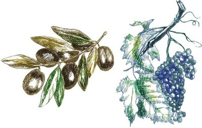 hand drawings into vector : two twigs ( olives and grapes)