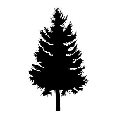 Hand drawn fir tree vector illustration. Silhouette of black pine tree.