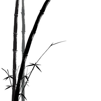 Hand drawn illustration of a bamboo black on white background.