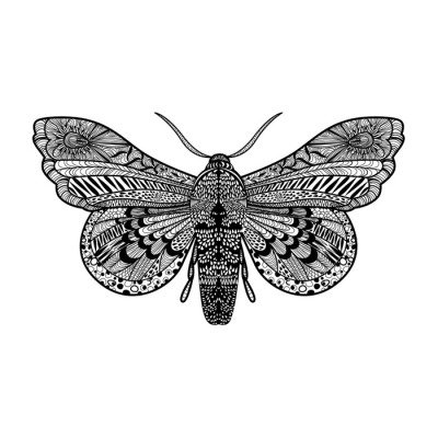 Hand drawn magic butterfly