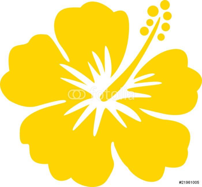 Hawaiiblume gelb