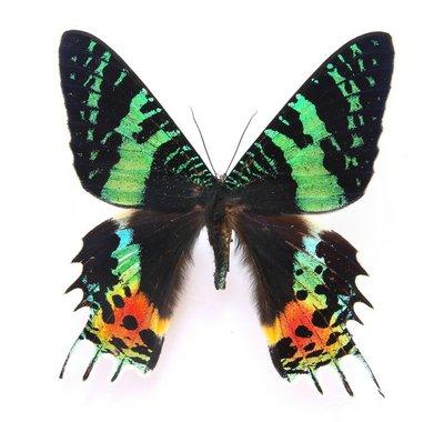 HD Beautiful specimens of butterflies