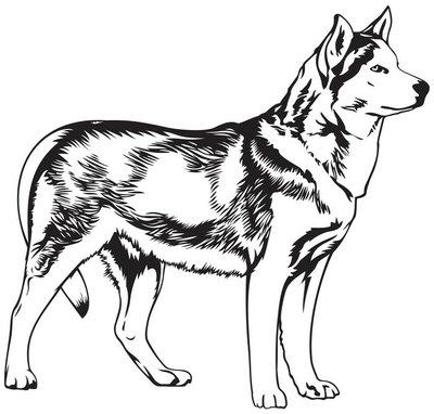 Husky dog breed vector illustration
