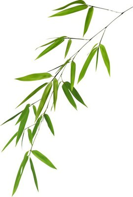 illustration with isolated lush green bamboo foliage