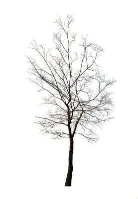 isolated winter dark bare tree