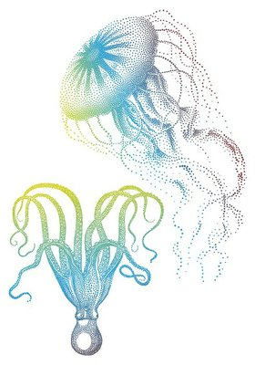 Jellyfish And Octopus, Vector