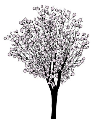 magnolia blossom tree isolated on white