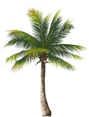 Wall Decal Palm