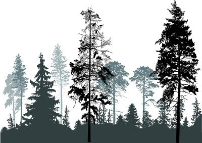 pine grey forest silhouettes isolated on white