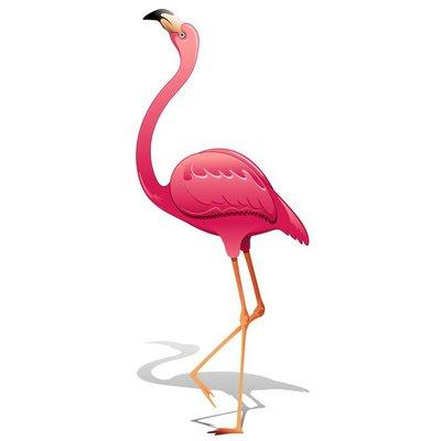 Pink Flamingo-Fenicottero Rosa-Vector