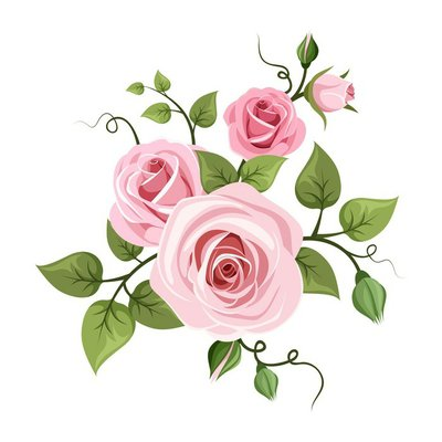 Pink roses. Vector illustration.