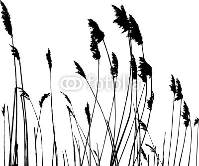 real grass silhouette - vector