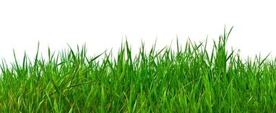 Real green grass for your background