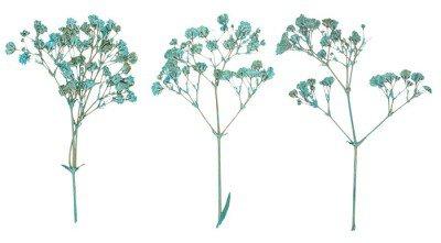 Set of wild dry pressed flowers