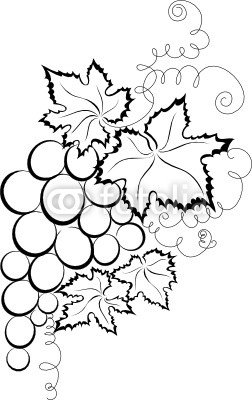 Sketch of branch grapes