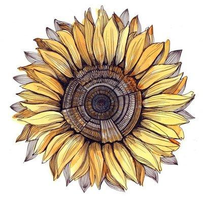 sunflower (series C)