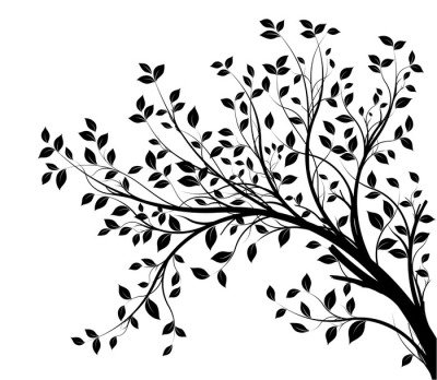 tree branches silhouette isolated white background