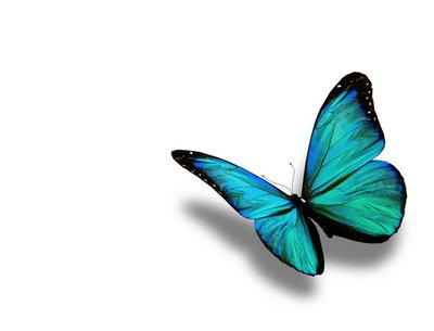 Turquoise butterfly, isolated on white background