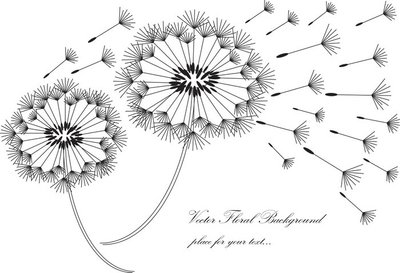 vector black and white dandelion background