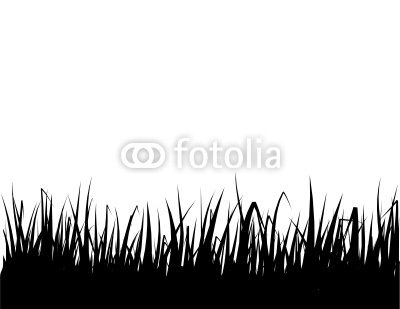 Vector isolated grass silhouette, on white background.