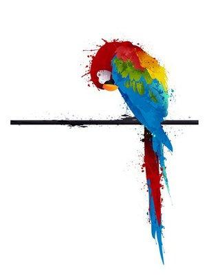 vector parrot parakeet, graffiti