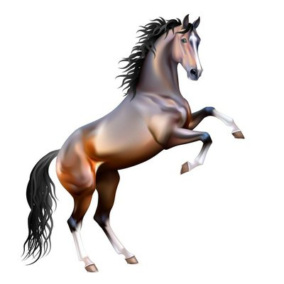Vector realistic bay horse rearing up isolated