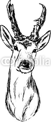 vector - roe-deer hand draw portrait, isolated