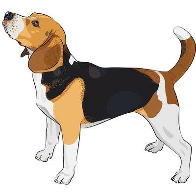Wall Decal vector sketch dog Beagle breed