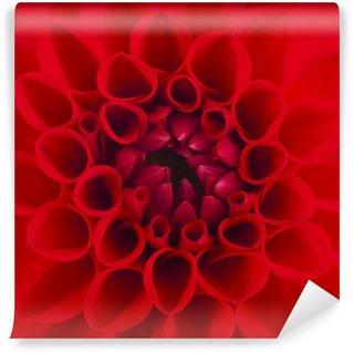 A red Dahlia flower Wall Mural - Vinyl