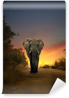 Wall Mural - Vinyl african elephant walking in sunset
