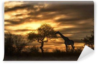 african giraffe walking in sunset