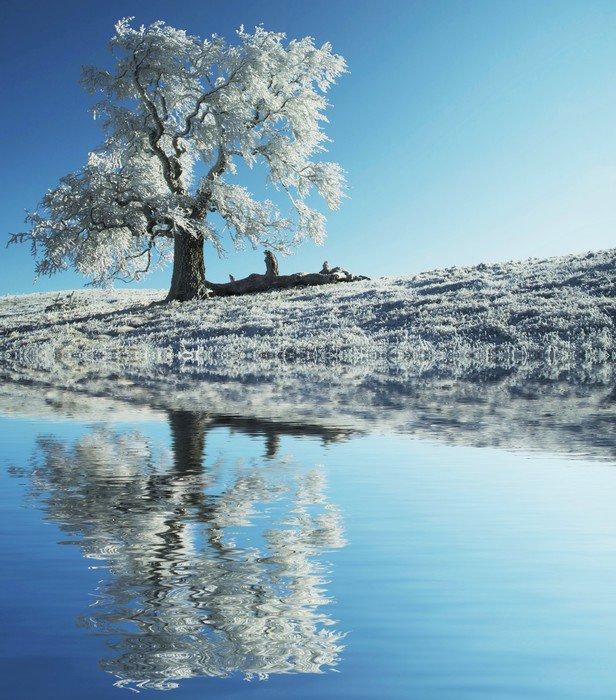 Wall Mural - Vinyl Alone frozen tree - Styles