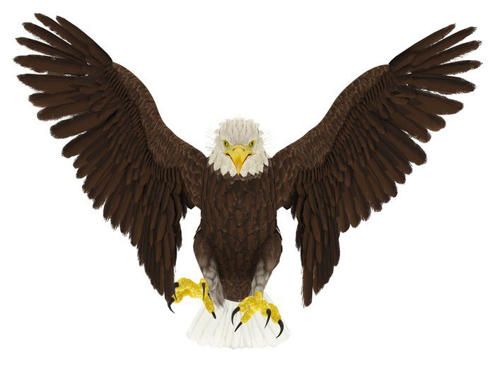 American bald eagle hunting front attack wall mural for Eagle wall mural