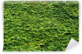 An Abstract Background Texture Of An Ivy Covered Wall