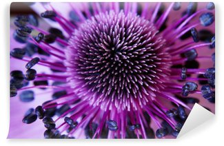 Wall Mural - Vinyl anamone flower