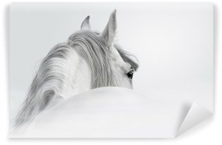 Vinyl Wall Mural Andalusian horse in a mist