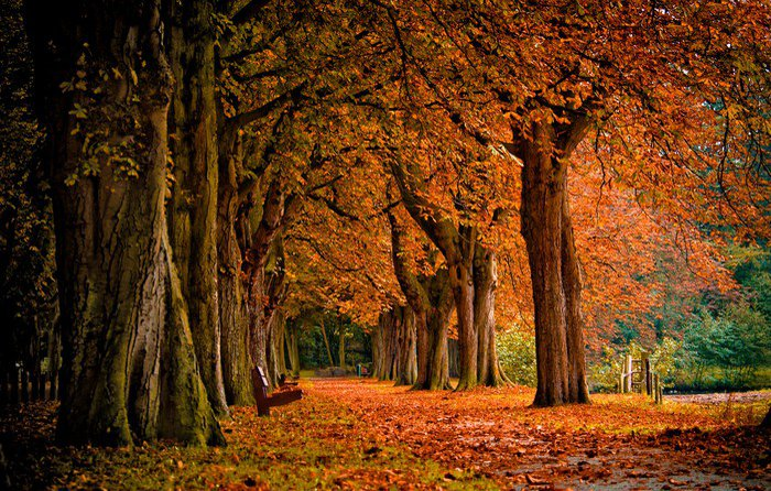 Wall Mural - Vinyl autumn colors in the forest - Themes