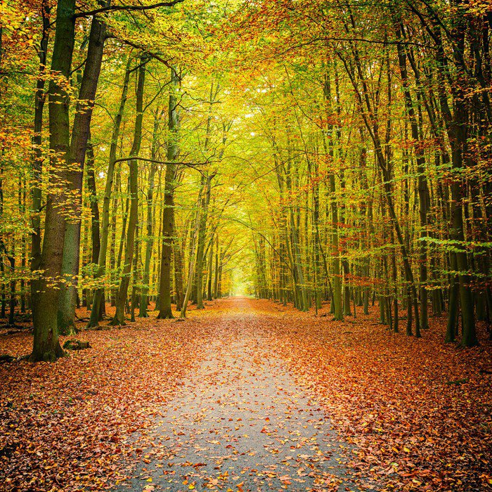 Charming Wall Mural   Vinyl Autumn Forest   Themes Part 21