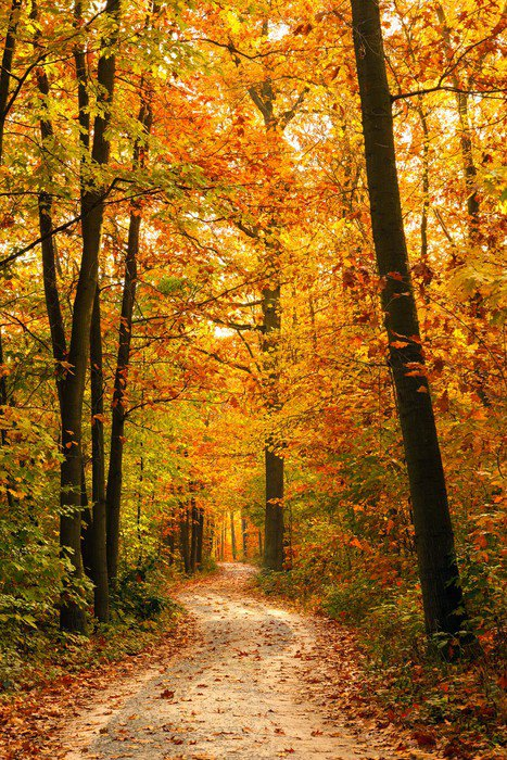 Nice Wall Mural   Vinyl Autumn Forest   Themes Part 32