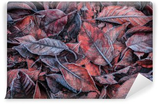 Autumn leaves covered with frost - background Wall Mural - Vinyl