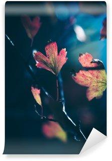 Autumn leaves in sunlight Wall Mural - Vinyl